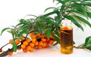 О пользе облепихового масла для лечения желудка