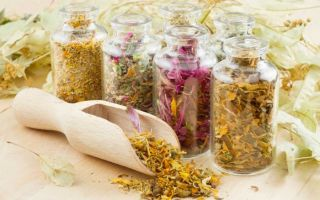 Рекомендованные травы при повышенной кислотности желудка