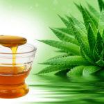 Алоэ и мед - средство от эрозивного гастрита