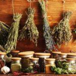 Травы при повышенной кислотности желудка