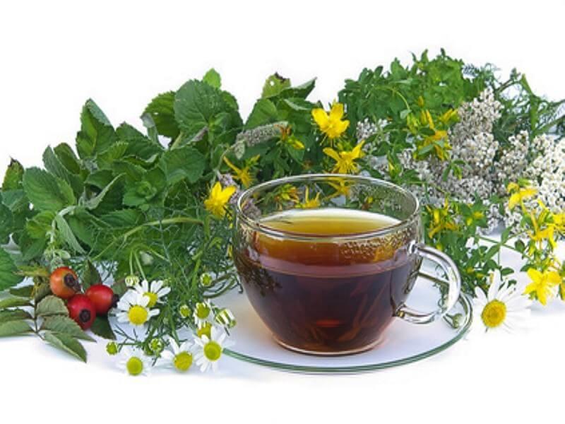 Травы для кишечника и желудка
