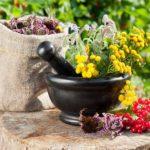 Особенности применения лечебных трав при гастрите с повышенной кислотностью