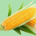 Кукуруза при гастрите: особенности употребления